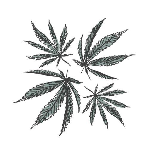 ingrediente naturale canapa