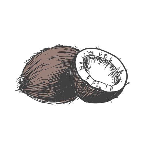 ingrediente naturale cocco
