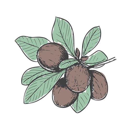 ingrediente naturale karite