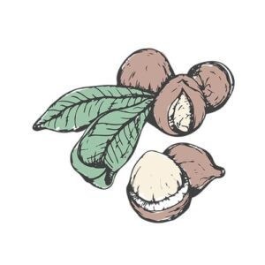 ingrediente naturale macadamia